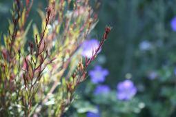 Bay Area Garden Design Perennials