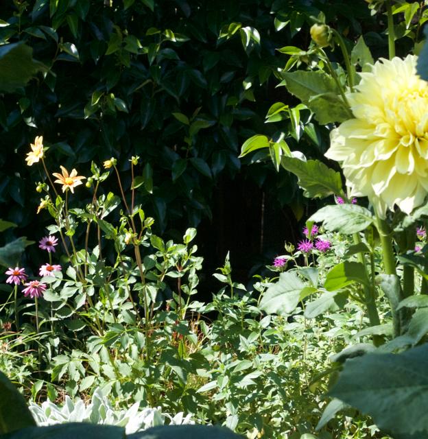 Cottage garden in Livermore CA.