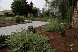Livermore_garden_design_agave_behind