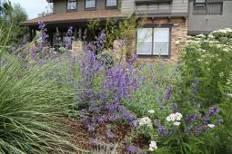Livermore_garden_design_perennials_close